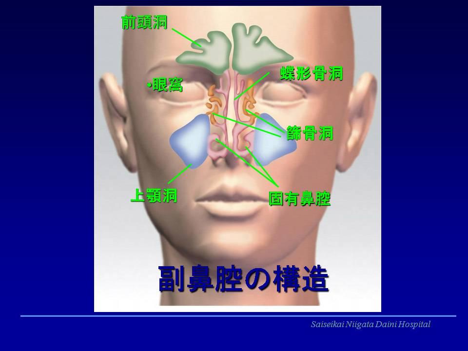 副鼻腔は鼻腔を囲むように存在する